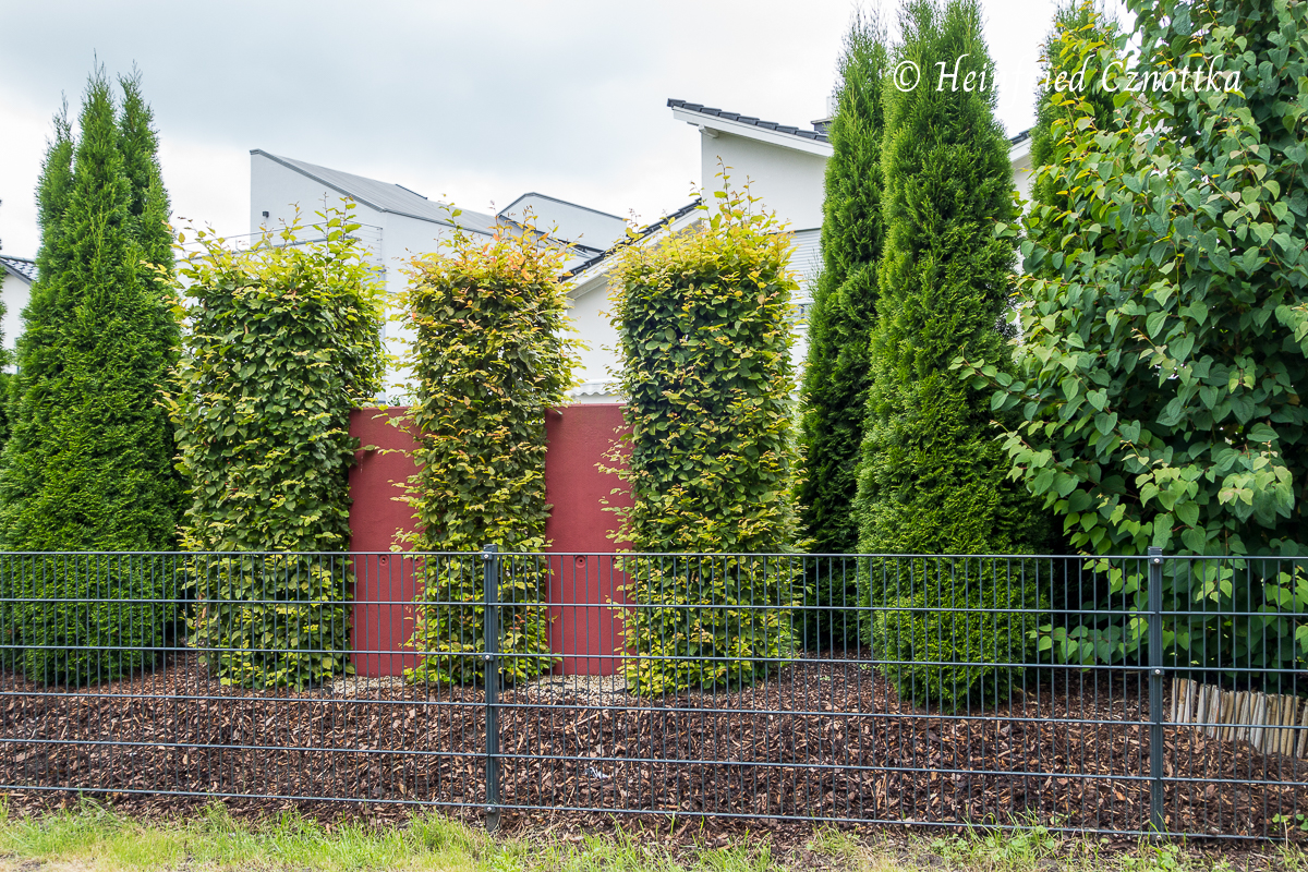 Eine gemischte Hecke aus immergrünen und laubabwerfenden Gehölzen, kombiniert mit farbigen Betonelementen schützt vor Einblicken.