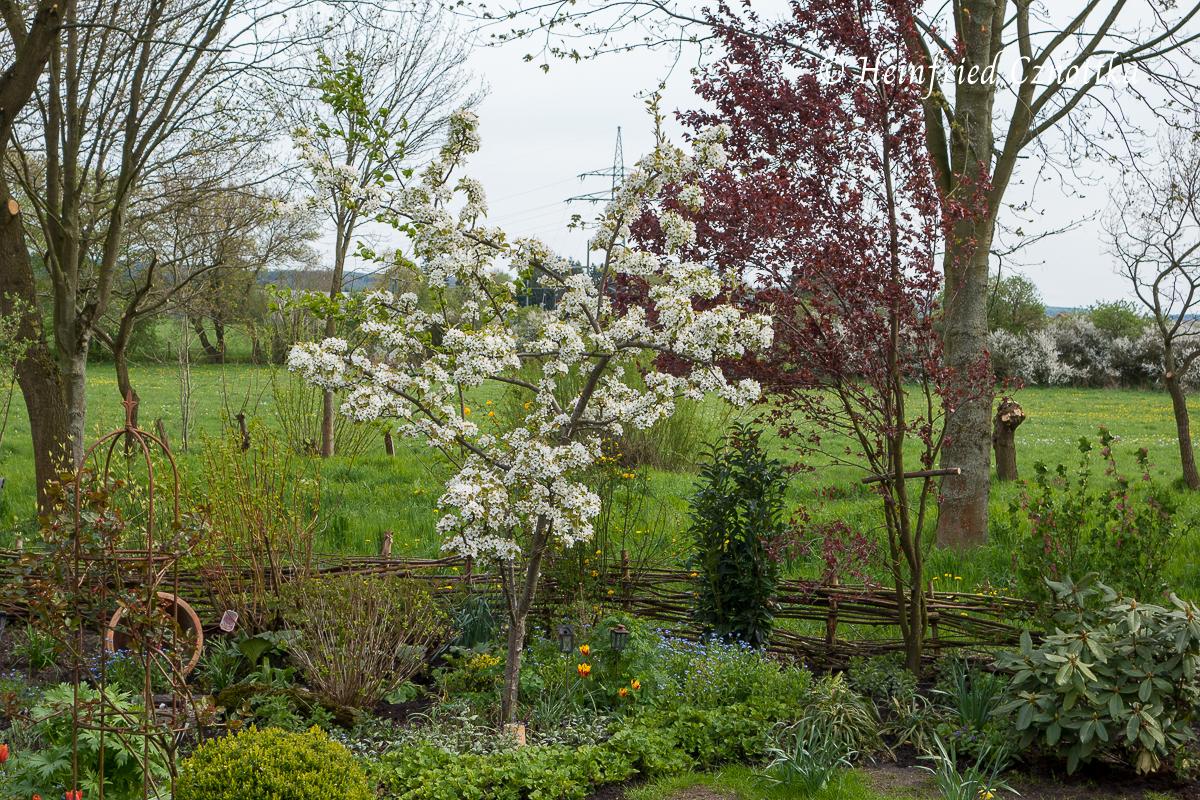 Niedriger Flechtzaun aus Weide als Grundstücksbegrenzung