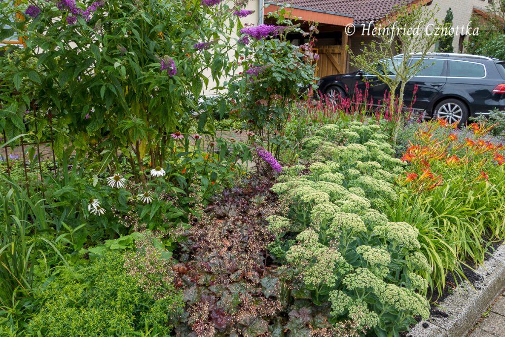 """Fetthenne und Purpurglöckchen (Heuchera """"Palace Purple"""") in Drifts gepflanzt."""