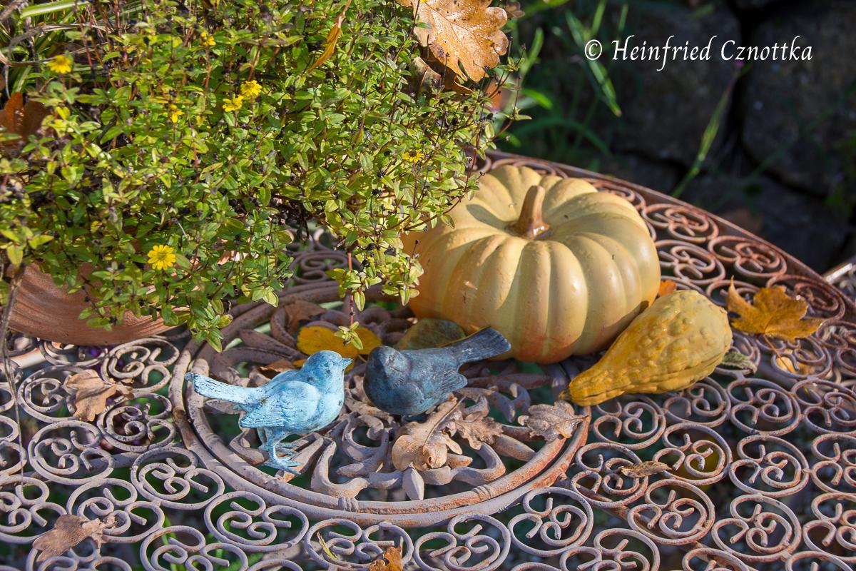 Letzte Blüten der Sommerblumen, Kürbisse und Herbstlaub