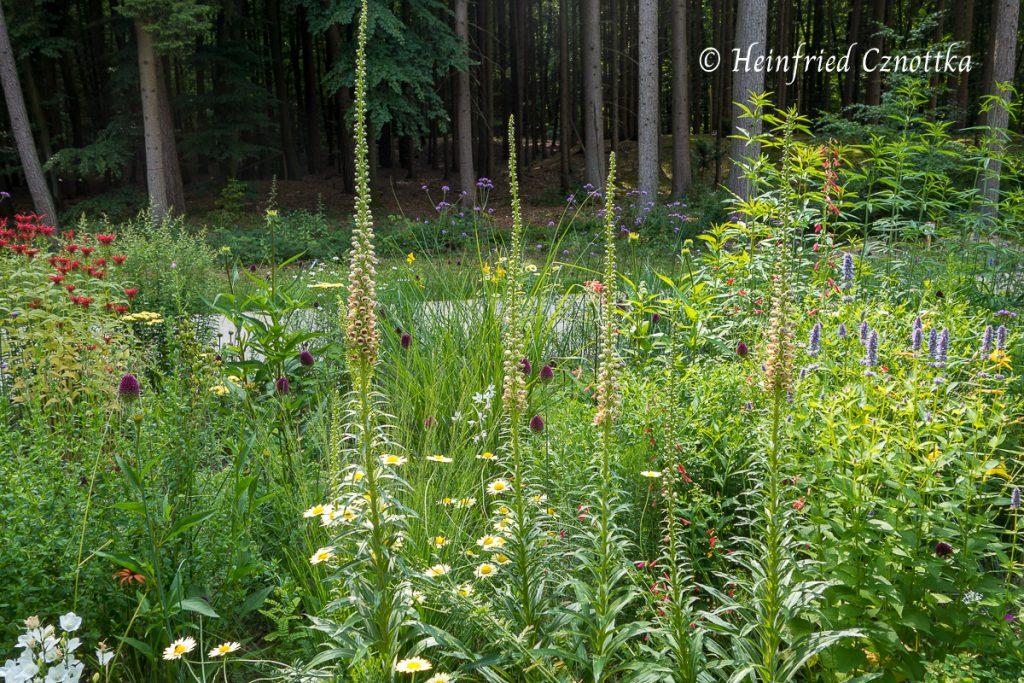 Landesgartenschau Bad Lippspringe, Das Beet der Gesellschaft der Staudenfreunde