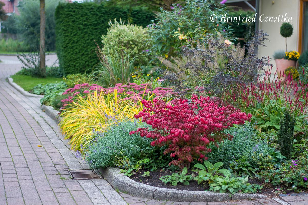 Der Korkspindelstrauch wird im Herbst leuchtend rot.
