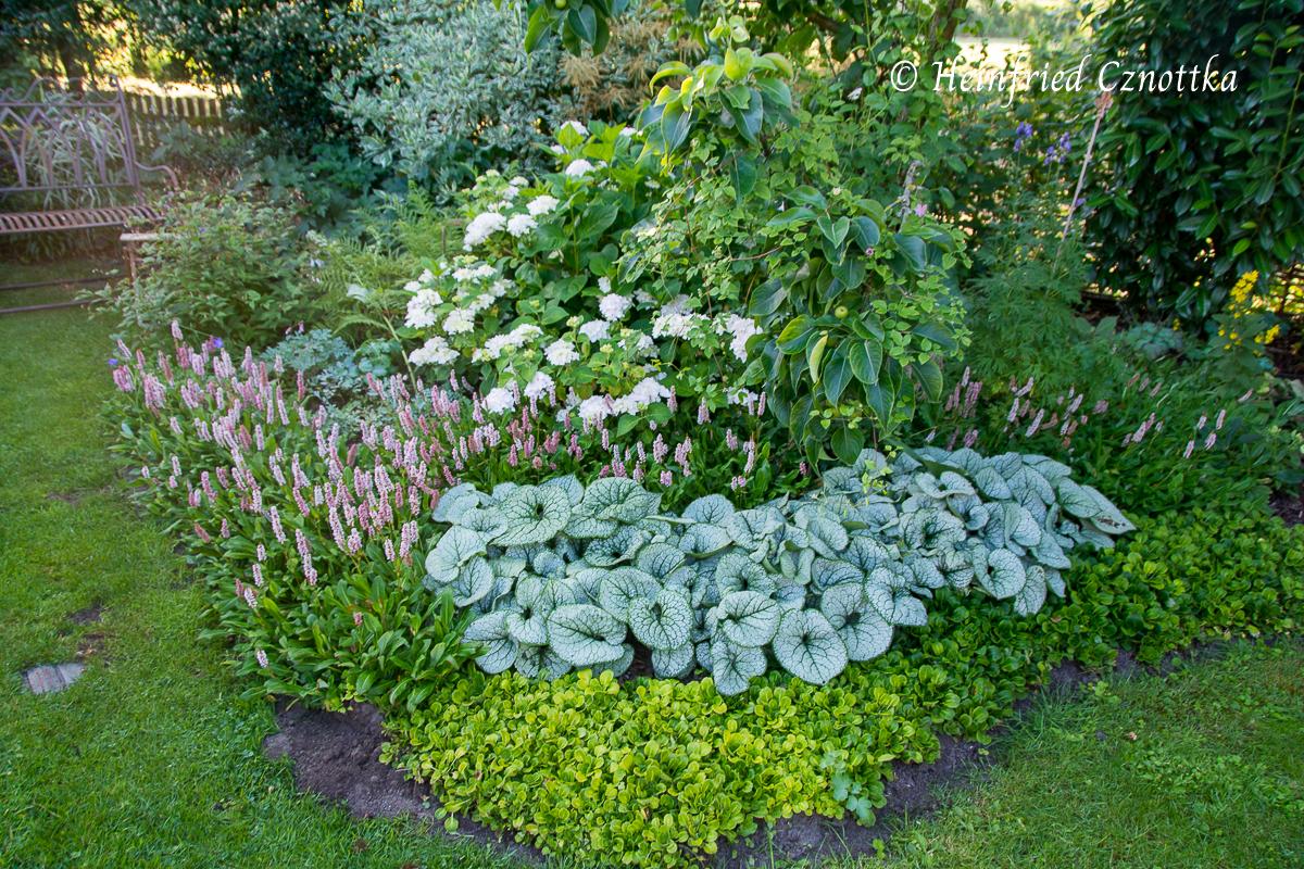 Pflegeleichte Pflanzenkombination für den Halbschatten