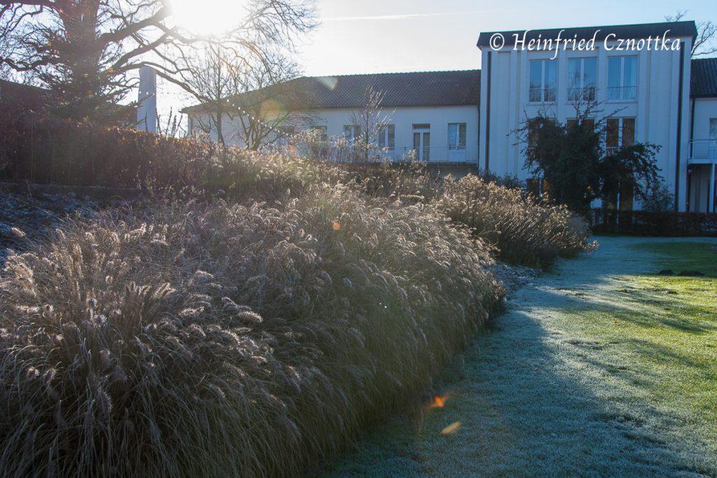 Lampenputzergras im Gegenlicht, Winter, Gartenschau, am Parkhotel Bad Lippspringe