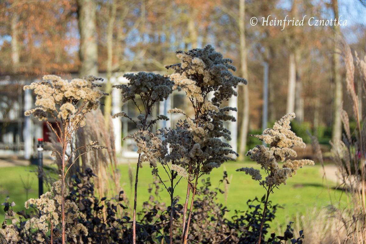 Gartenschau: Samenstände im Winter, Wie mit Wolle umhüllt