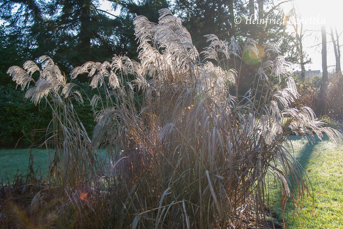 Gartenschau: Samenstände im Winter, Zarte Schleier