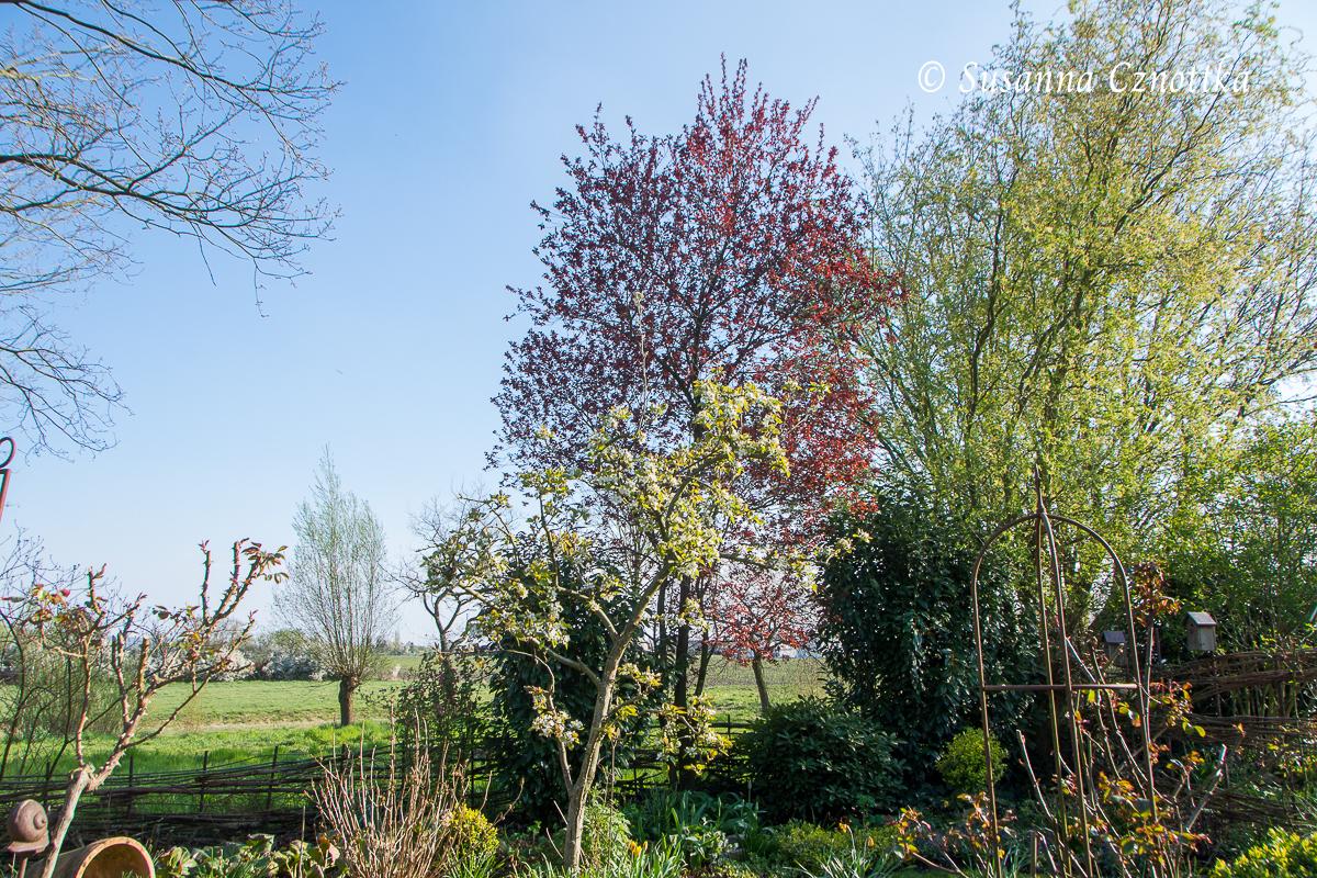 Garten mit geborgter Aussicht im Frühling