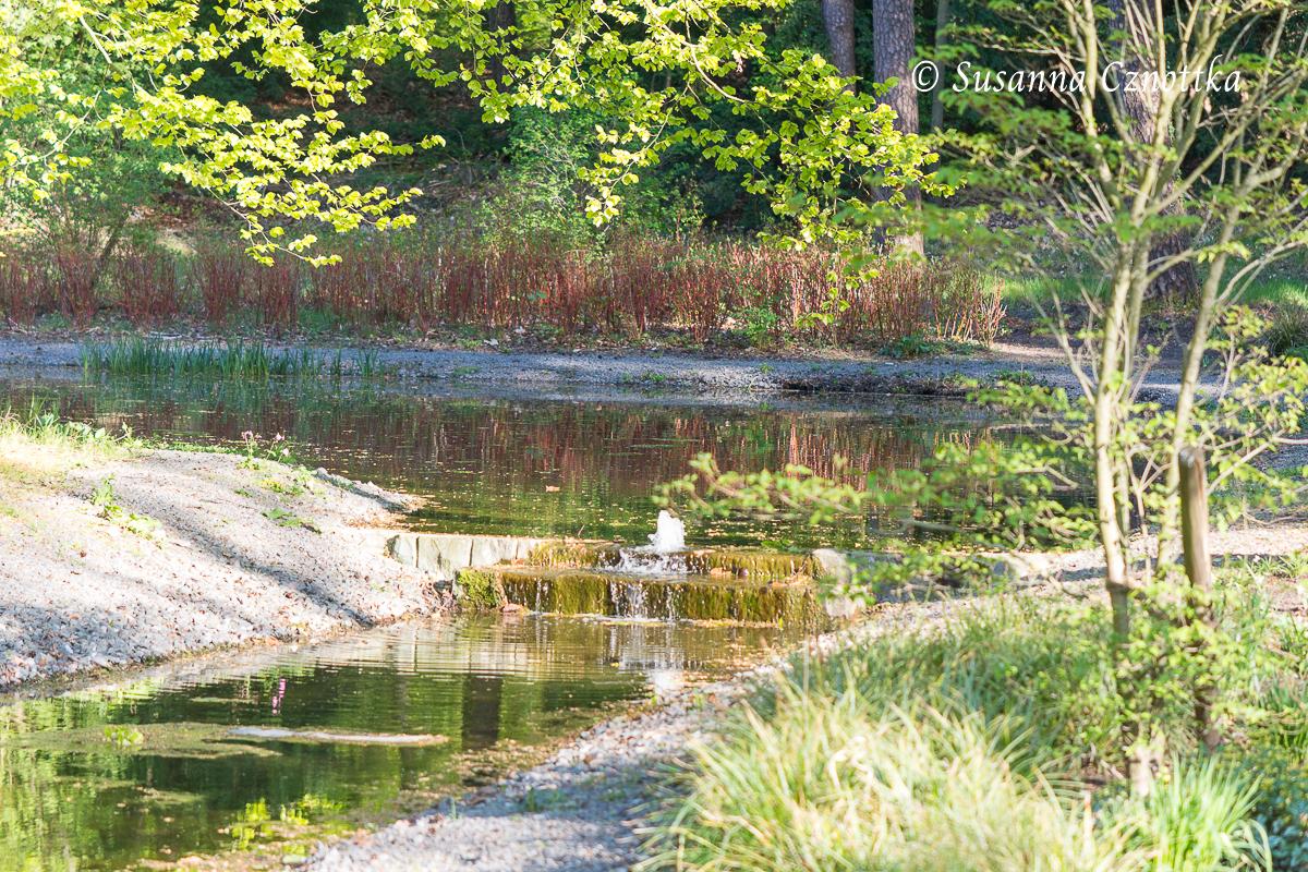 Gartenschau Bad Lippspringe, Frisches Maigrün und roter Hartriegel am Teich