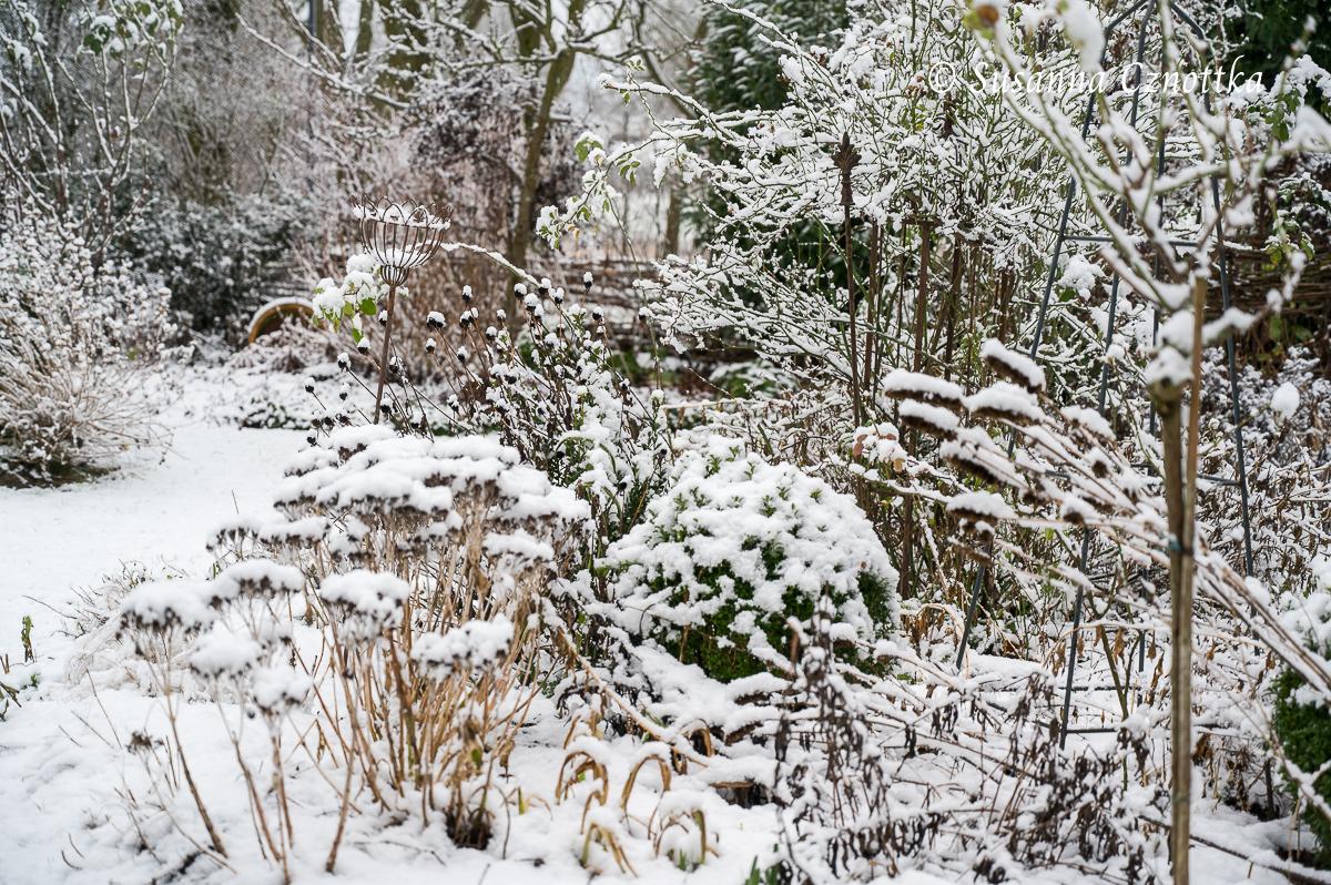 Unterschiedliche Samenstände tragen im Schnee zum Winterbild bei.