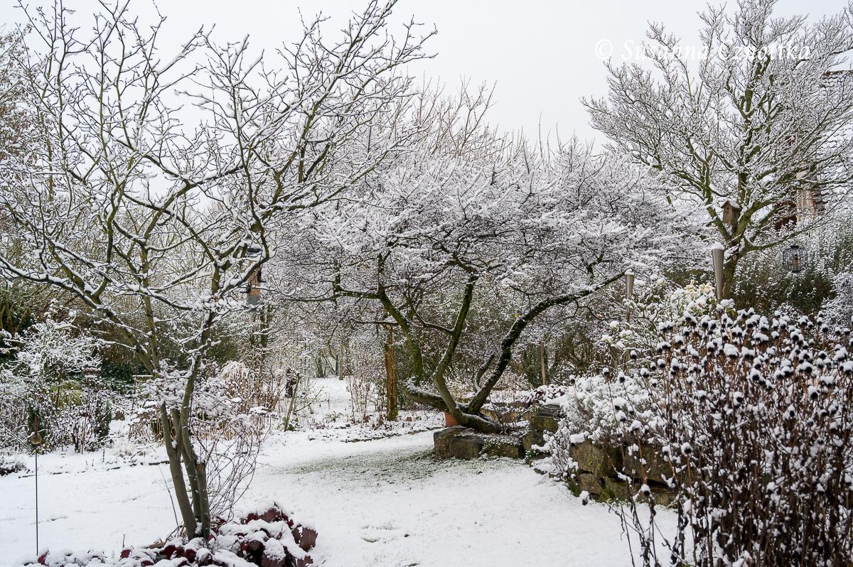 Das Gerüst der Bäume und Sträucher wird vom Schnee betont.