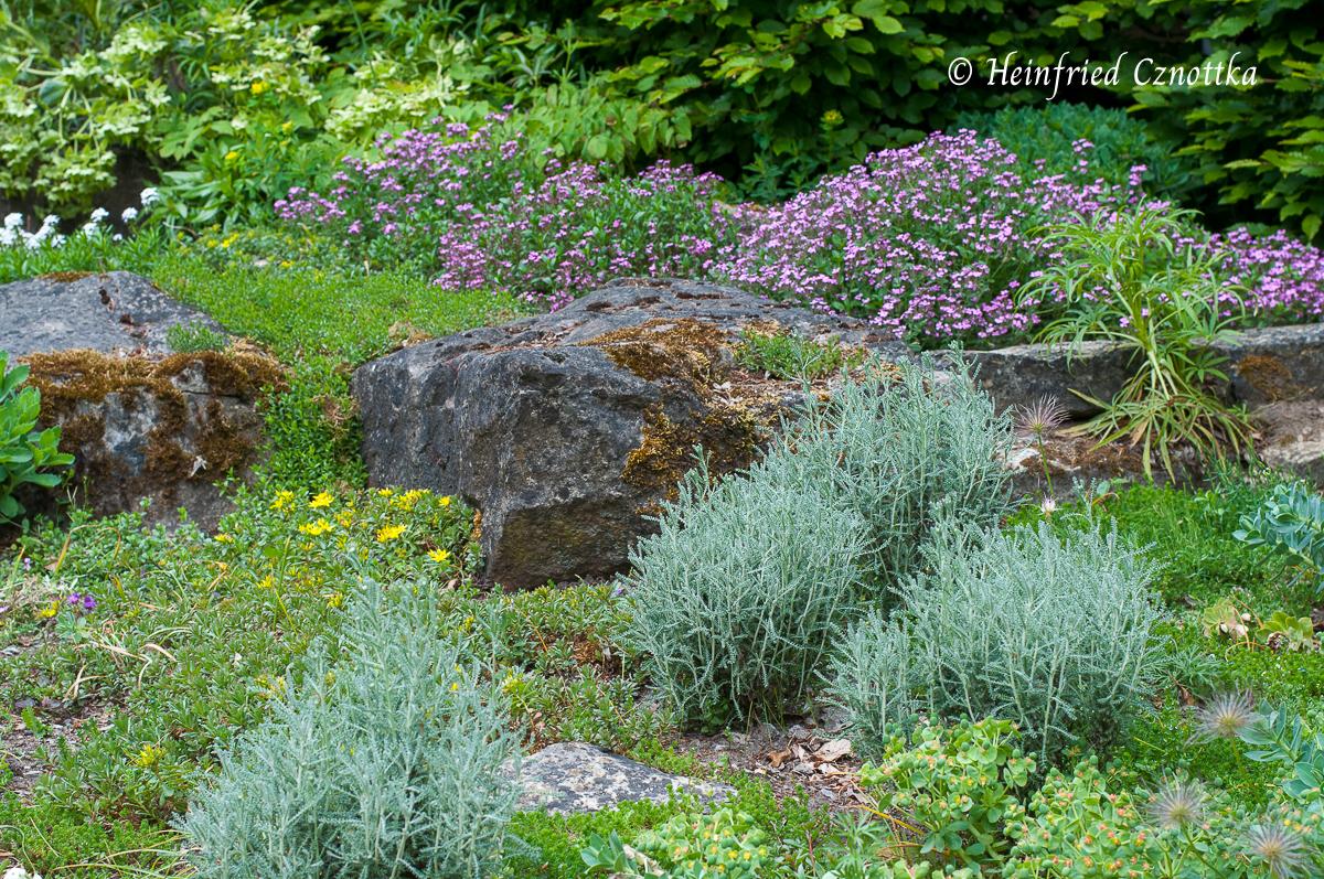 Steine fügen sich natürlich ein und strukturieren die lockere Bepflanzung