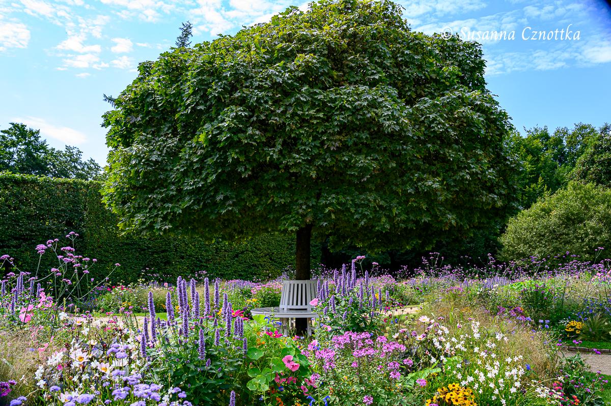 """Baumbank unter einem Kugelahorn (Acer """"Globosum"""") mit Blumenbeeten"""