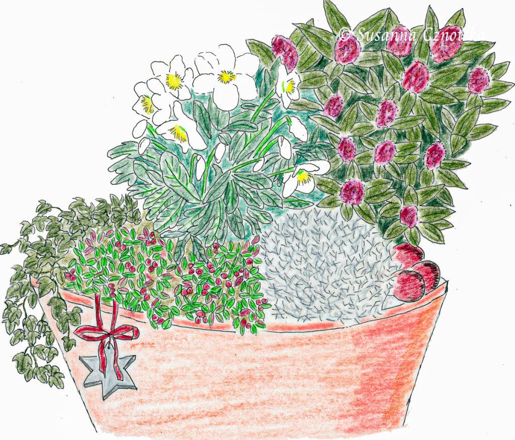 Kübelpflanzen Winter Zeichnung