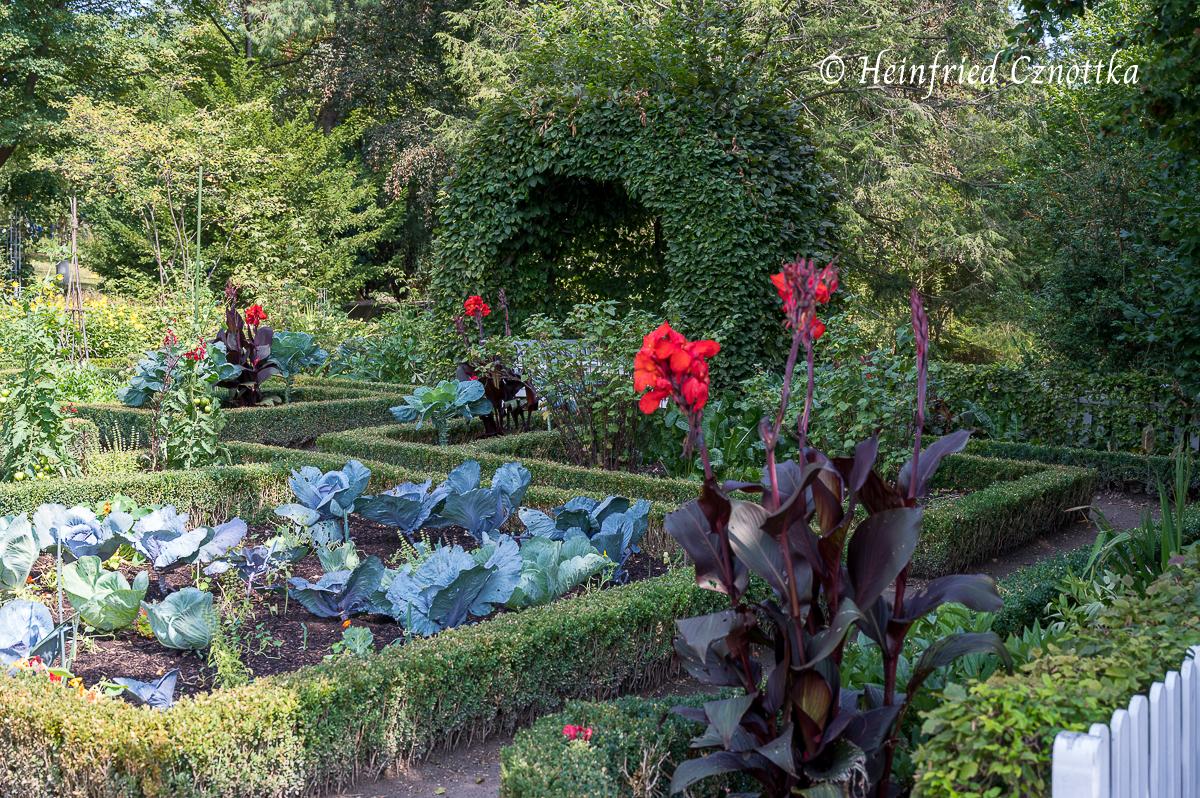 Indisches Blumenrohr im Bauerngarten (Westfalenpark Dortmund)
