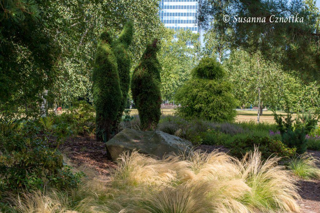 In Form geschnittener Wacholder (Juniperus) mit Zartem Federgras (Stipa tenuissima) im Vordergrund