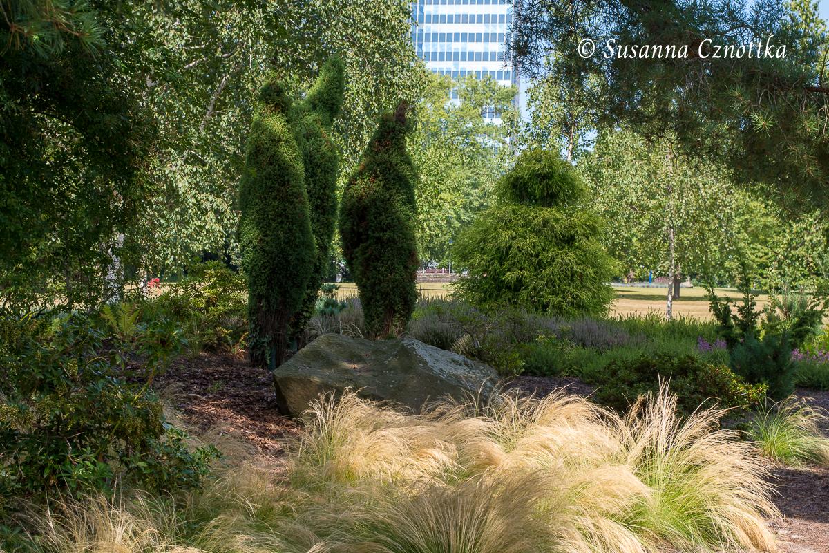 In Form geschnittener Wacholder (Juniperus) mit Zartem Federgras (Stipa tenuissima) im Vordergrund (Westfalenpark Dortmund)
