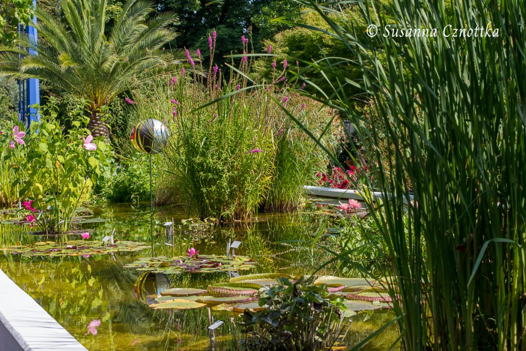 Wasserbecken unter anderem mit Seerosen