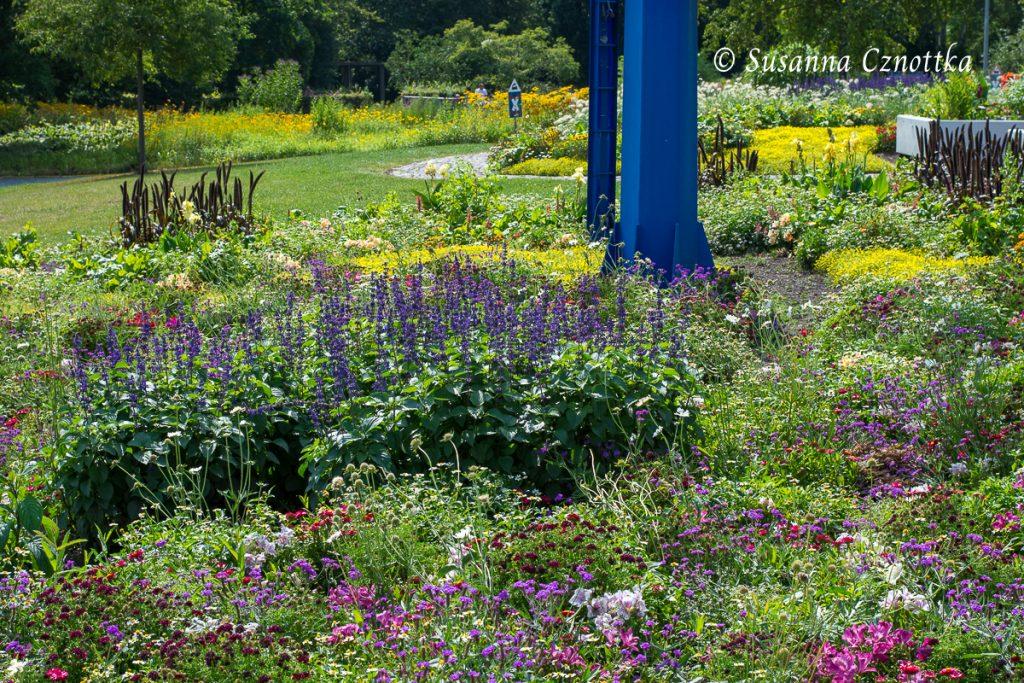 Bunte Sommerblumenpflanzung