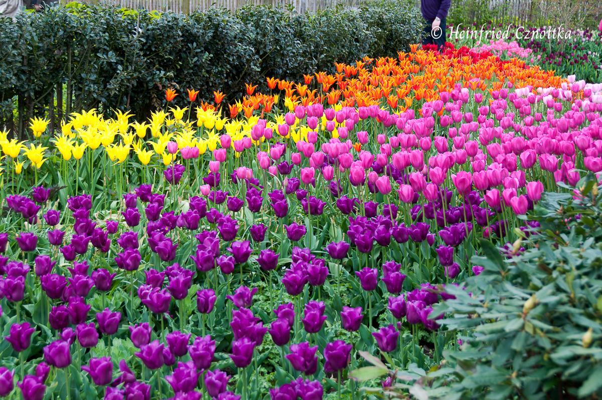Großzügige Tulpenpflanzung auf der Floriade in Venlo