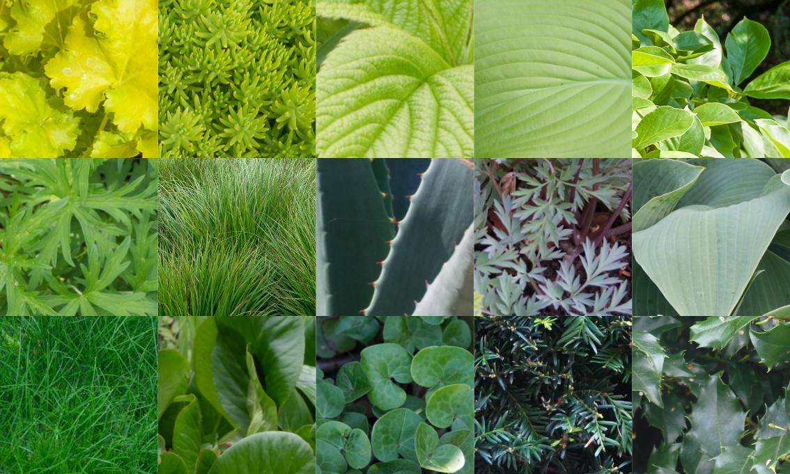 Verschiedene Nuancen und Helligkeitsstufen von Grün