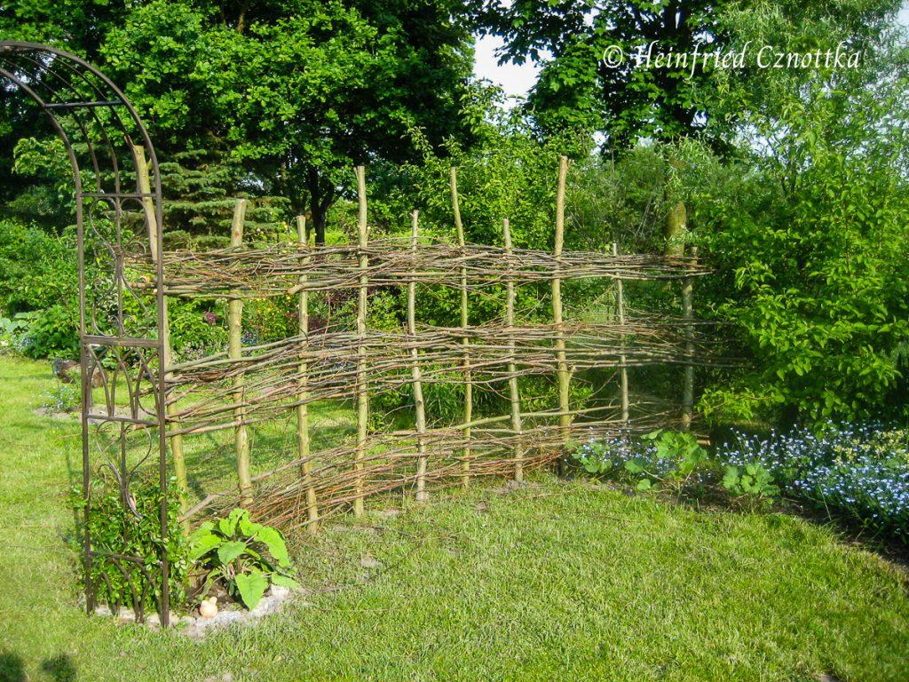 Weidenpfähle werden für einen Weidenzaun mit langen Ruten durchflochten.