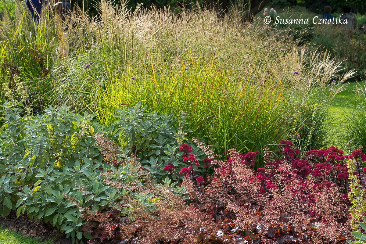 """Silbriger Gewürzsalbei (Salvia officinalis) harmoniert mit rotlaubigem Purpurglöckchen (Heuchera) und der Fetthenne (Hylotelephium telephium) """"Red Cauli"""""""