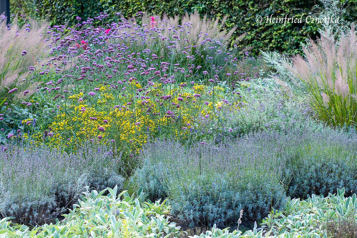 Argentinisches Eisenkraut mit Lavendel, Wollziest (Stachys byzantina) und Diamantgras (Calamagrostis brachytricha