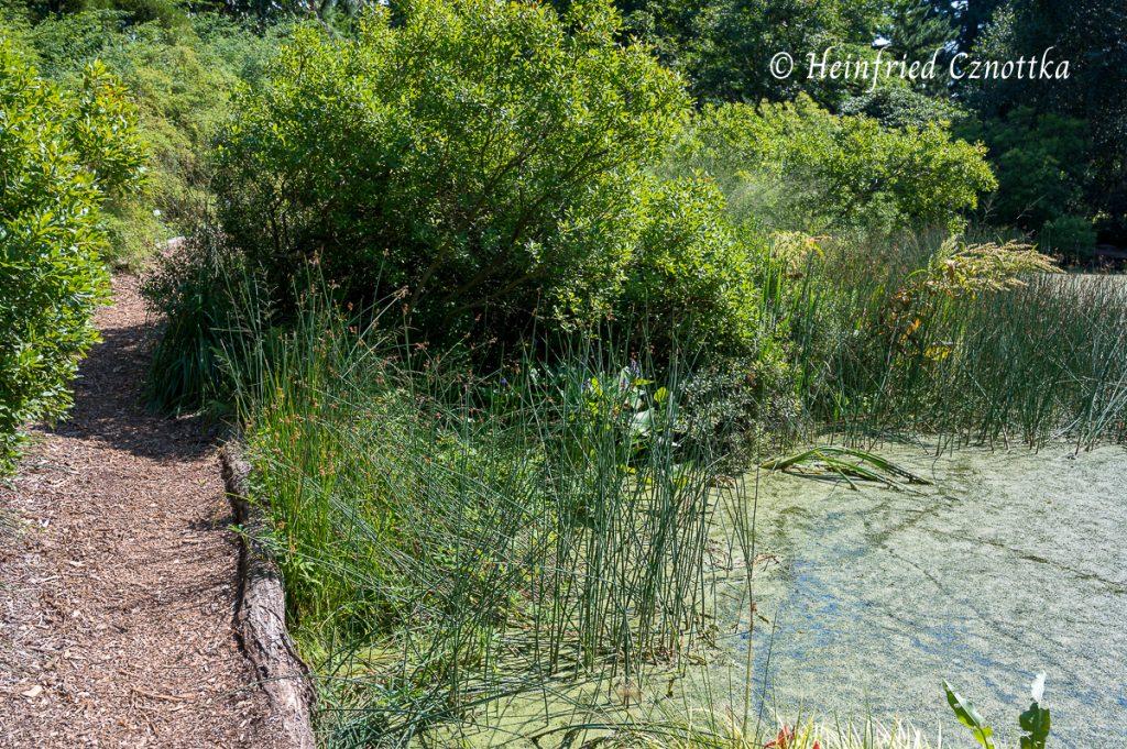 Weiche Mulchwege führen nah am Wasser entlang.