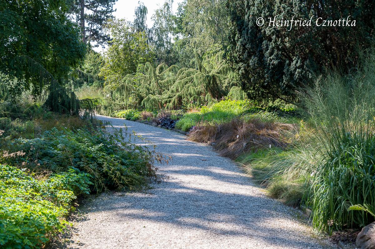 Verschiedene Blatt- und Nadelfarben, Texturen und Wuchsformen (Berggarten Hannover)