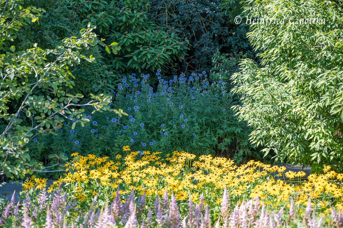 Prachtspiere (Astilbe), Sonnenhut (Rudbeckia) und Kugeldisteln (Echinops ritro) (Berggarten Hannover)