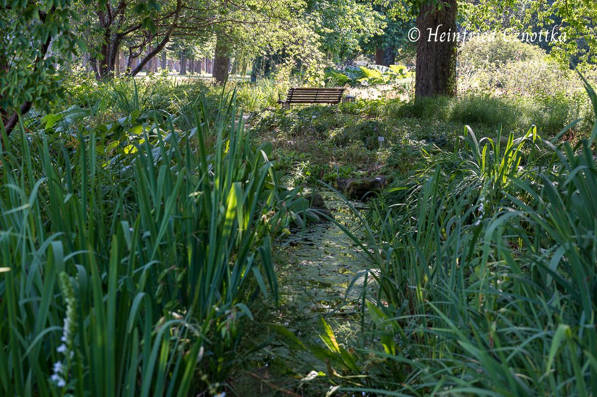 Durchblick über den Bachlauf zur Lindenallee (Berggarten Hannover)