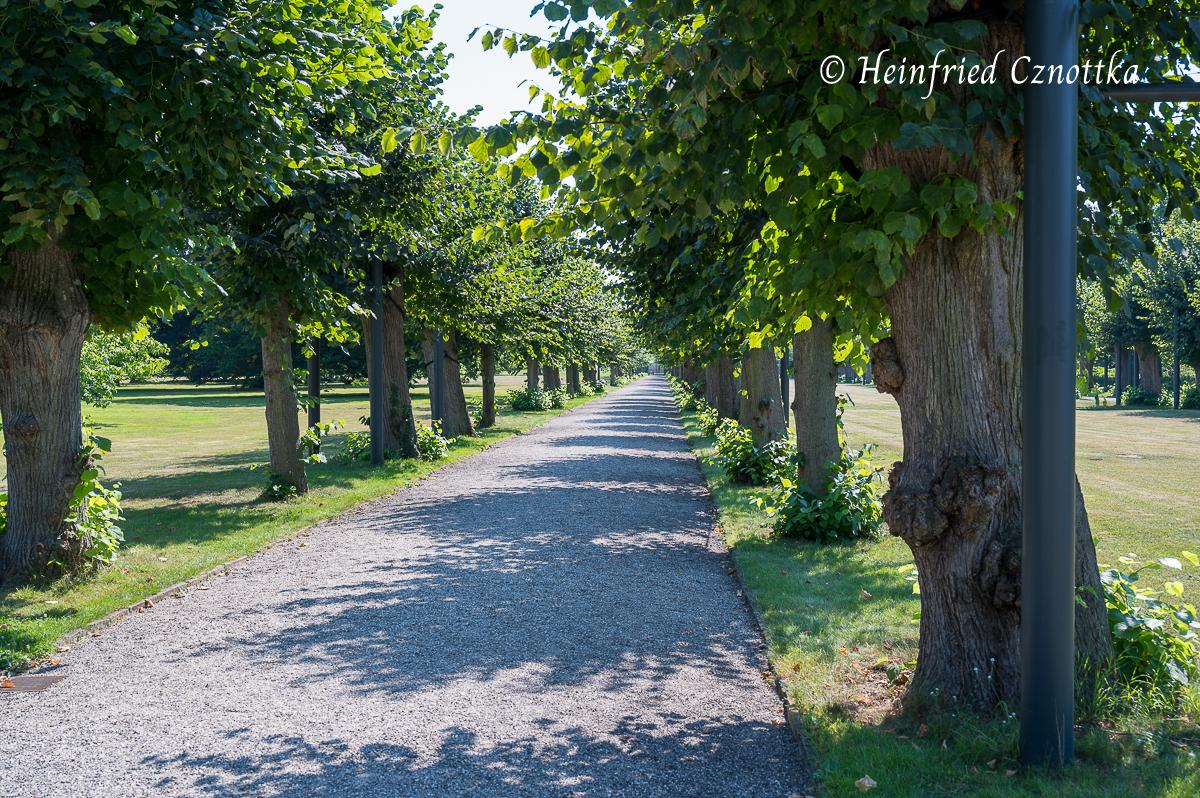 Lindenallee im Berggarten Hannover