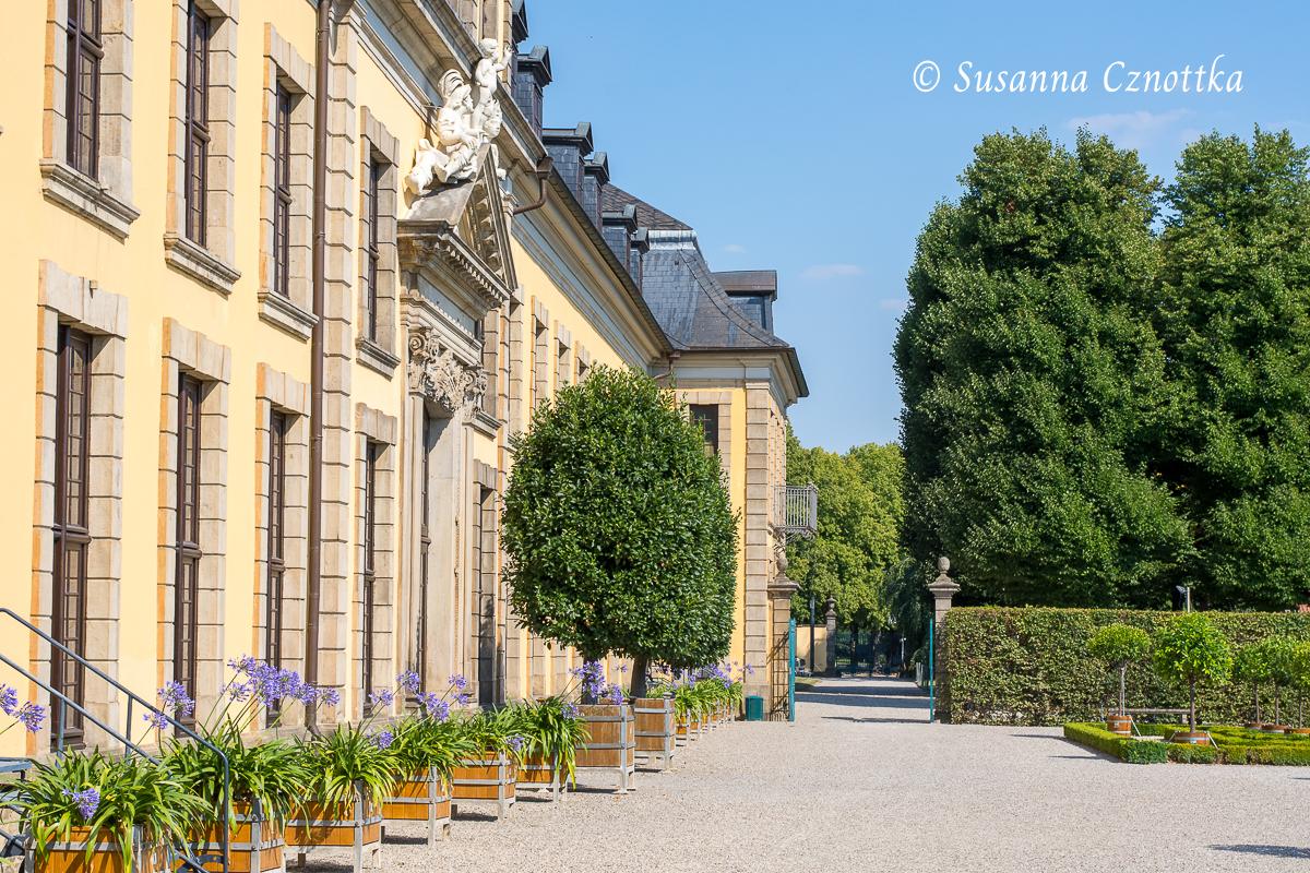 Afrikanische Schmucklilien (Agapanthus africanus) entlang des Galeriegebäudes (Herrenhäuser Gärten, Hannover)