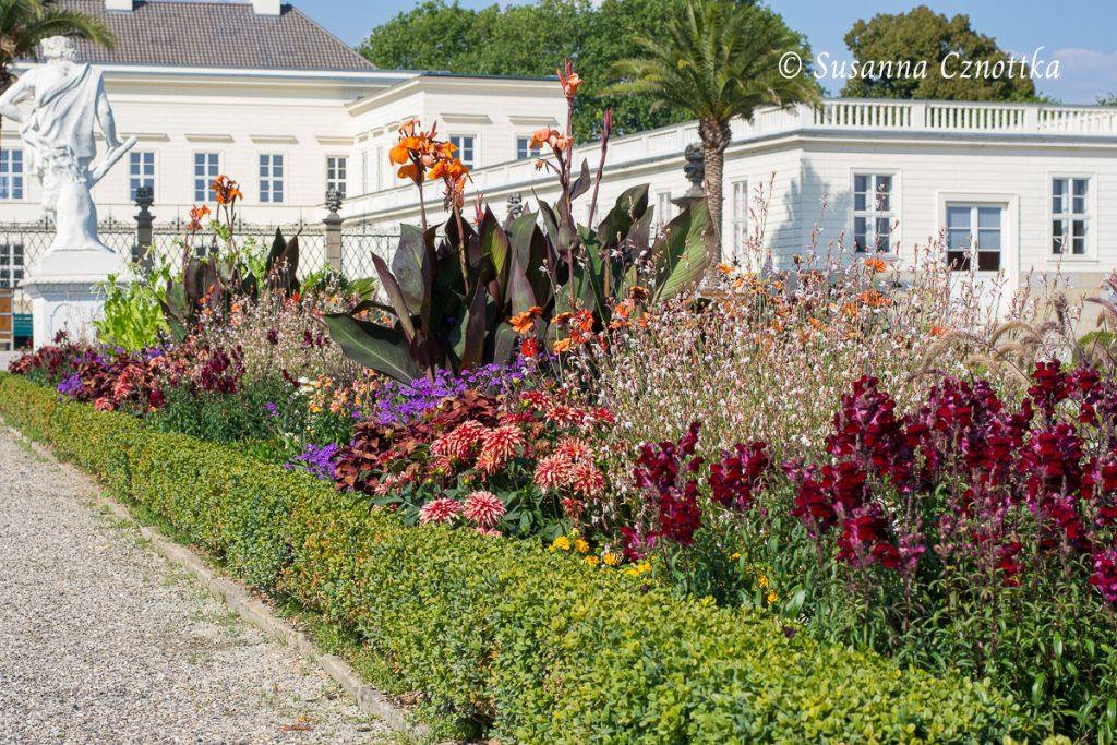 Wechselflor u.a.: Rote Löwenmäulchen , Indisches Blumenrohr, Dahlien, Prachtkerze
