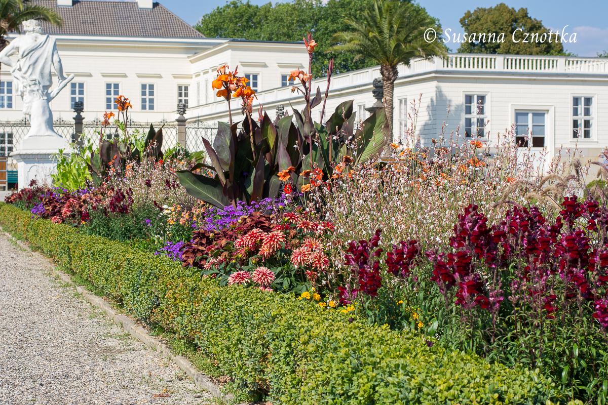Wechselflor u.a.: Rote Löwenmäulchen , Indisches Blumenrohr, Dahlien, Prachtkerze (Herrenhäuser Gärten, Hannover)
