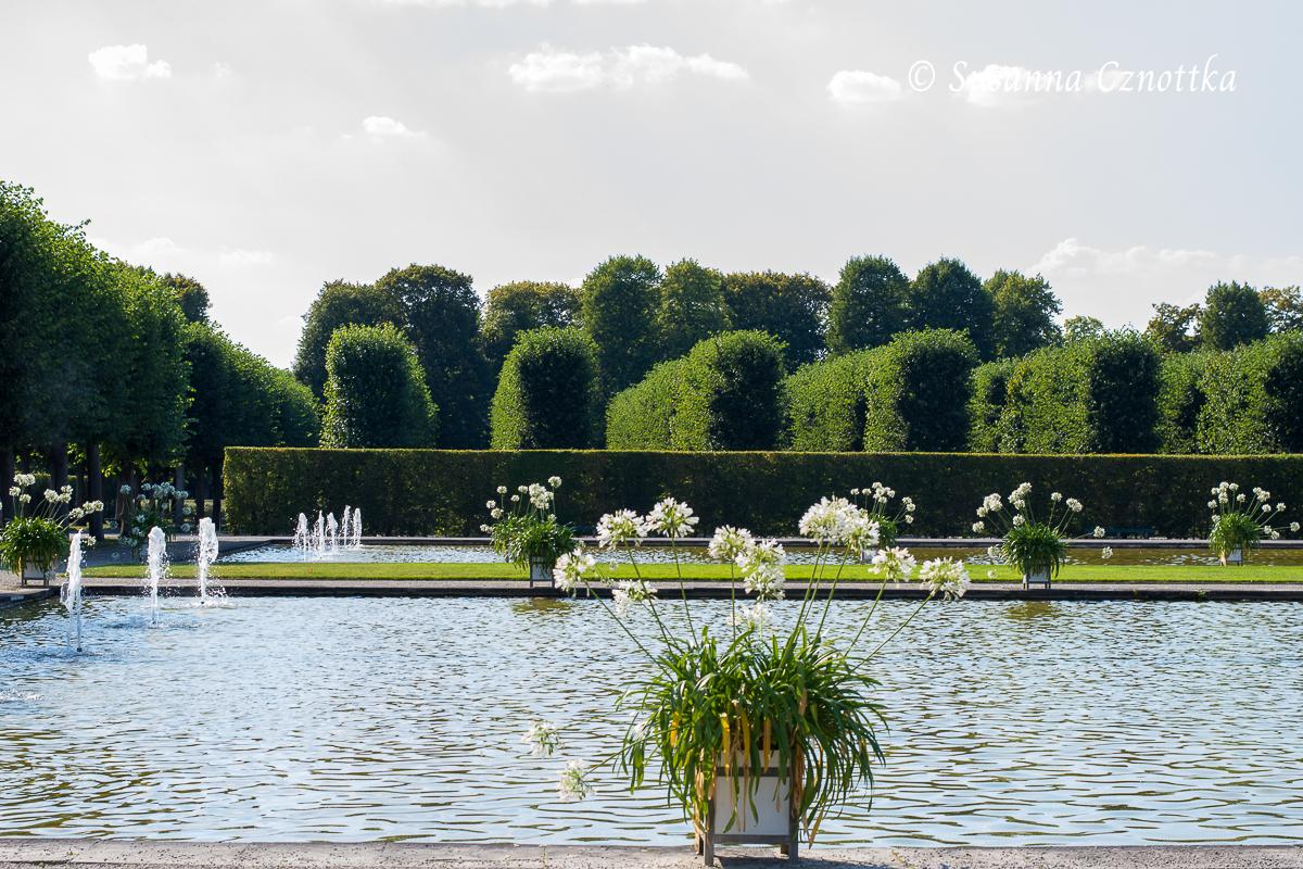 Schwanenteiche mit weißen Schmucklilien (Herrenhäuser Gärten, Hannover)