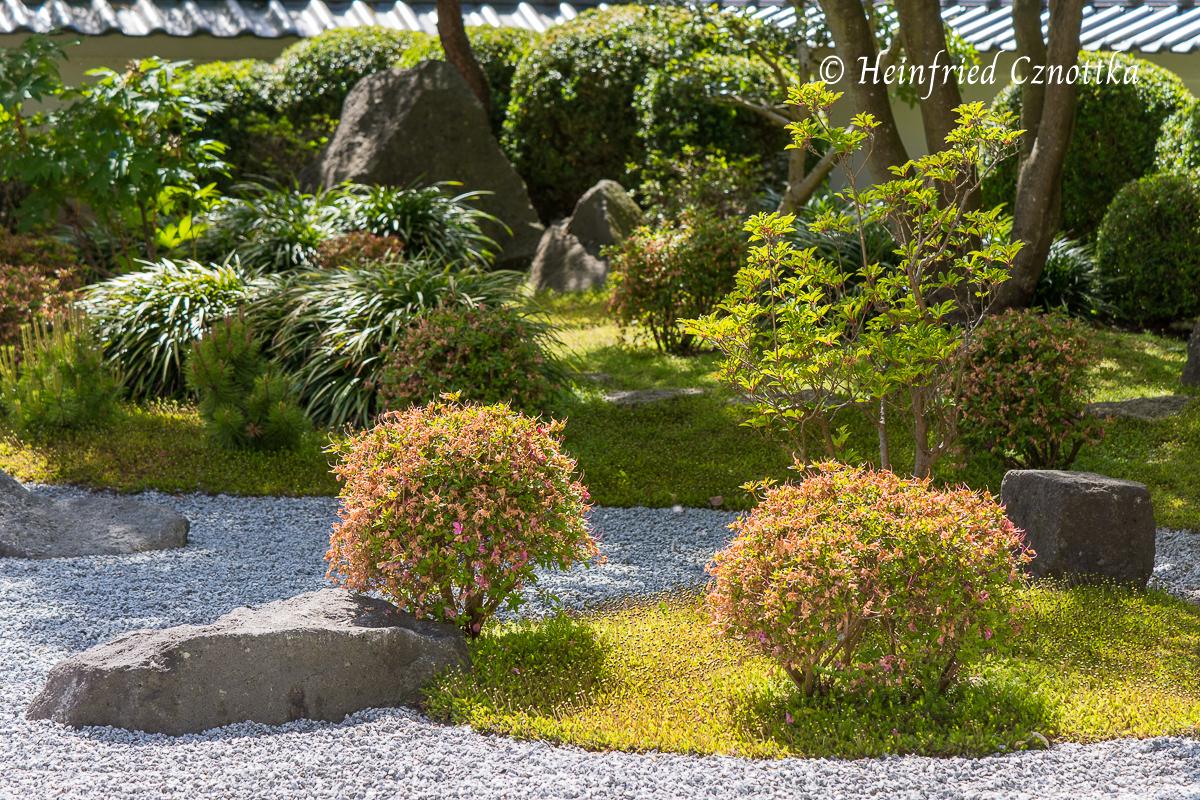 Japanischer Garten Bielefeld, bei unserem Besuch waren die Azaleen  verblüht.