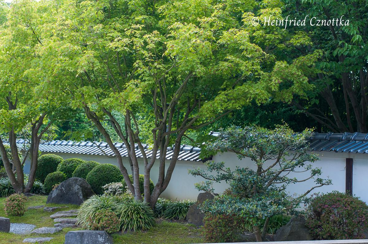 Japanischer Garten Bielefeld. Die Mauer umschließt den Garten fast vollständig.