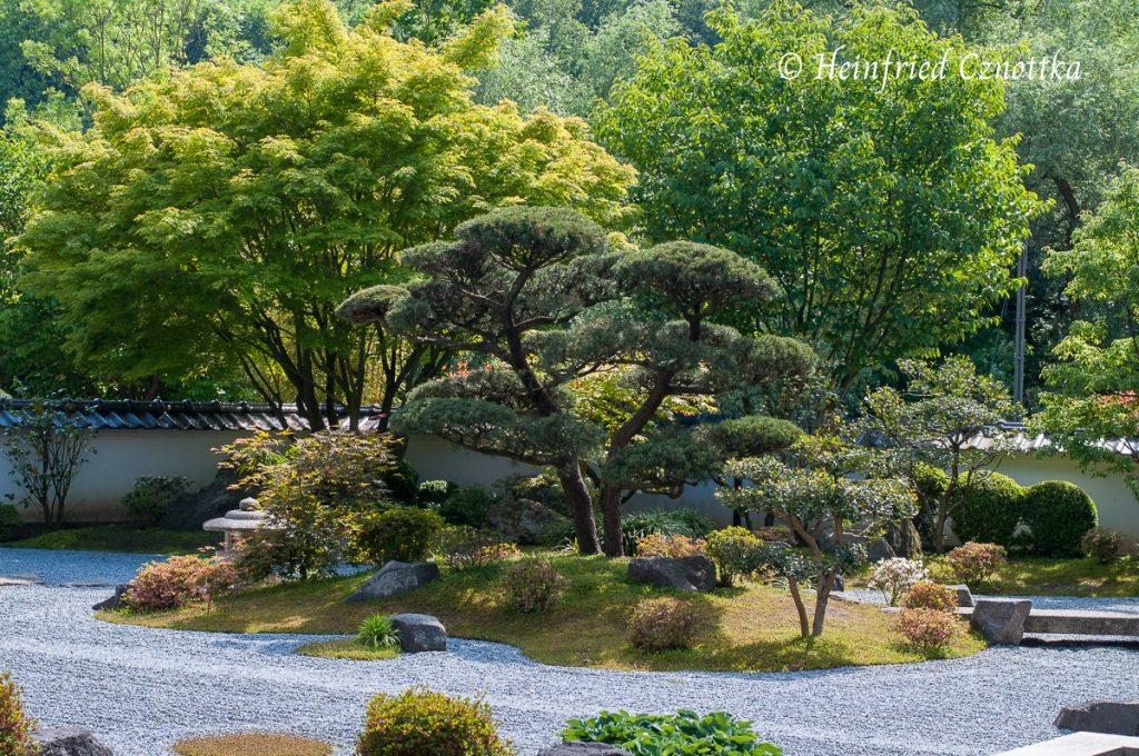 Japanischer Garten Bielefeld, die Kranichinsel mit  Formschnitt-Kiefer