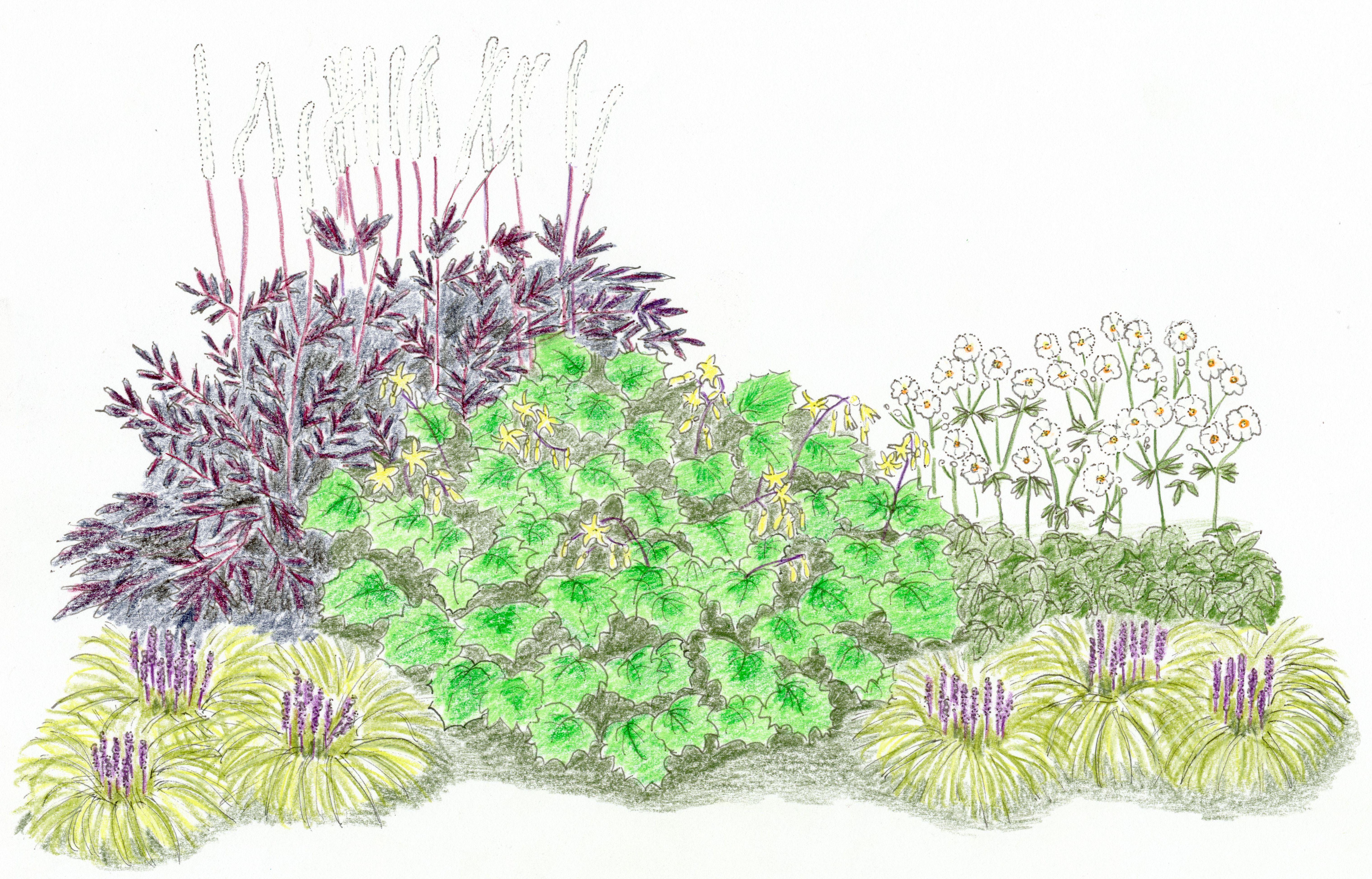 """Oktober-Silberkerze, Japanische Wachsglocke, Herbst-Anemone """"Honorine Jobert"""" und Lilientraube, Zeichnung"""
