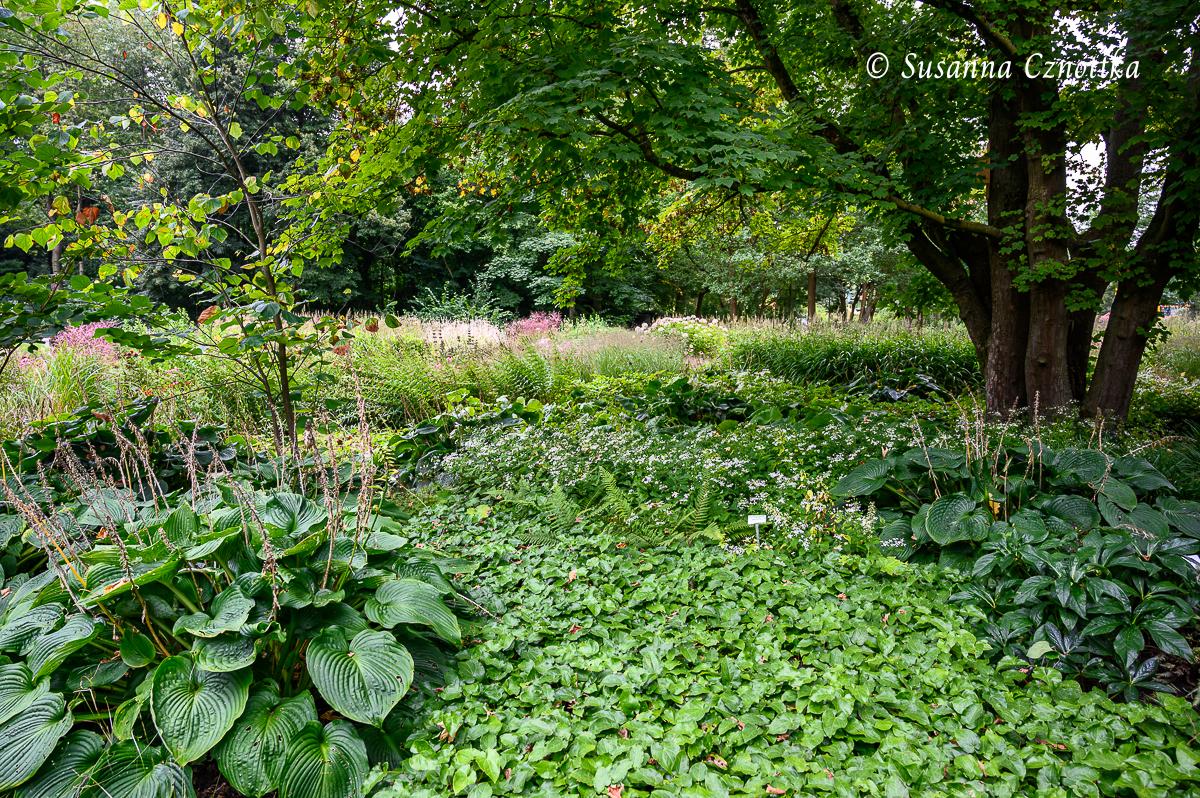 Schattiger Bereich mit Unterpflanzung aus Funkien (Hosta), Elfenblumen (Epimedium), Weißer Waldaster (Eurybia divaricata) und Farnen