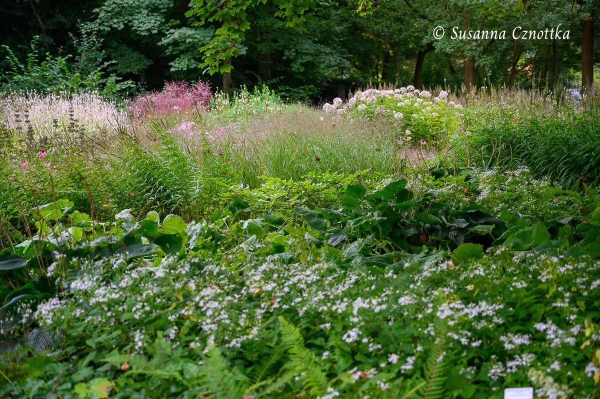 Schattenpflanzung (Piet Oudolf)