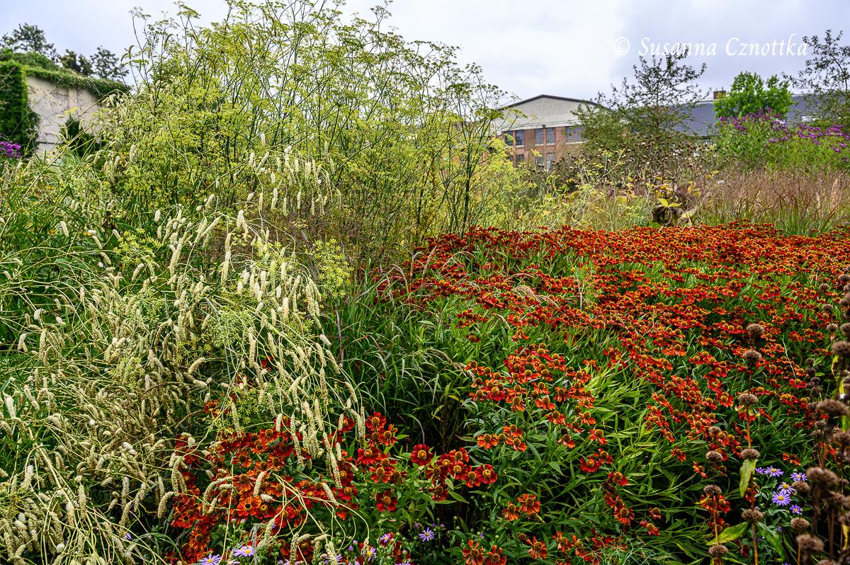"Blutwurz (Sanguisorba tenuifolia ""Alba"") und Fenchel (Foeniculum vulgare) neben orangeroter Sonnenbraut"