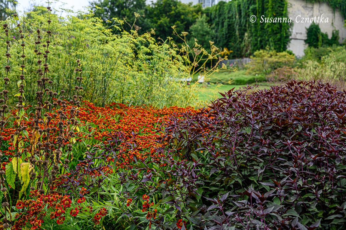 Sonnenbraut und Brauner Dost, Fenchel und Samenstände des Syrischen Brandkrauts (Phlomis russeliana