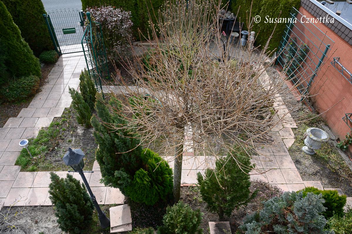 Renovierungsbedürftiger Garten