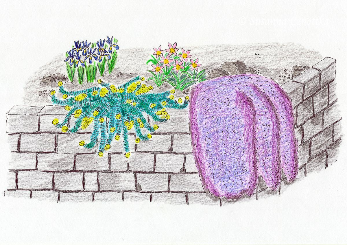 Kombination, Walzenwolsmilch, Euphorbia myrsinites, Iris reticulata, Zeichnung