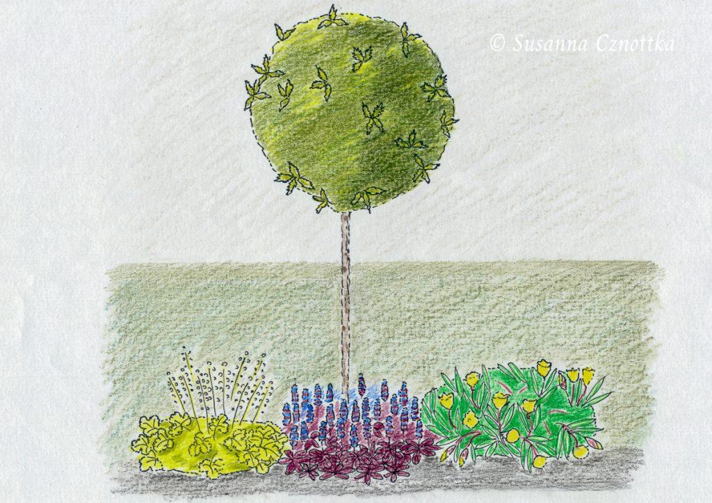 """Duftblüte, Osmanthus heterophyllus """"Goshiki"""", Nachtkerze, Günsel, Purpurglöckchen """"Lime Rickey"""", Zeichnung"""