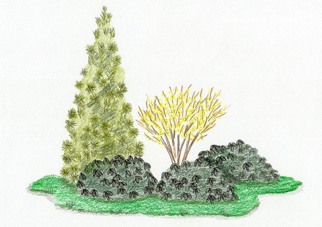 Eine ganzjährig attraktive, pflegeleichte Sträucherkombination mit immergrünen Gehölzen