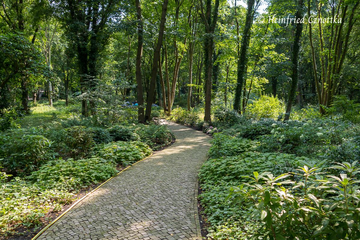 Das Spiel von Licht und Schatten in einem Waldstück