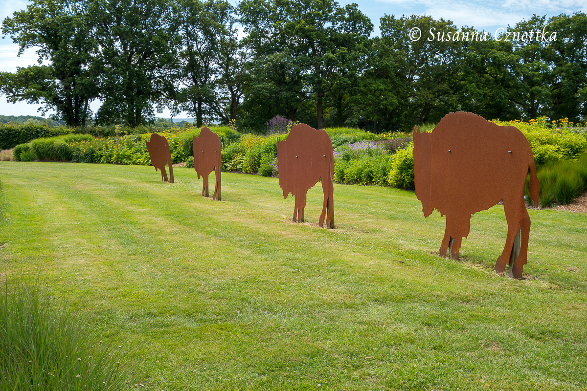 Sussex Prairies Garden, Büffelherde aus Metall